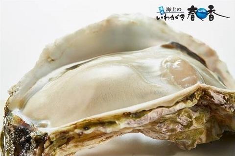 いわがき春香丸ごと凍結Mサイズ<水産物応援商品>