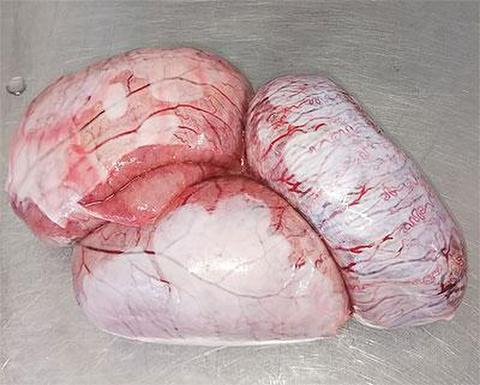 国産豚ホーデン2個 睾丸 玉 希少部位 冷凍