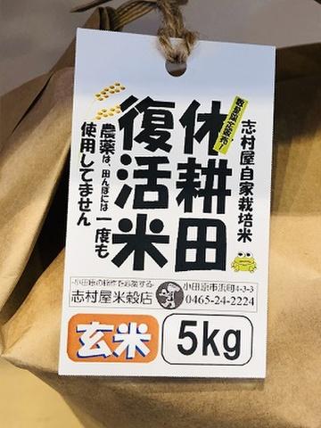 農薬化学肥料不使用 休耕田復活米 5kg 玄米