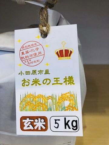農薬化学肥料不使用 小田原市産 お米の王様 いのちの壱 玄米 5kg