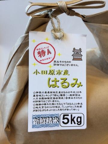 小田原市産 はるみ 5kg