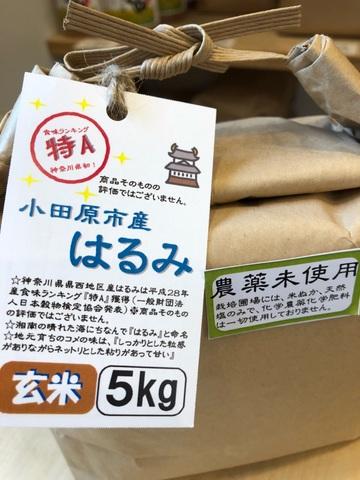 農薬化学肥料不使用 小田原市産はるみ 玄米 5kg
