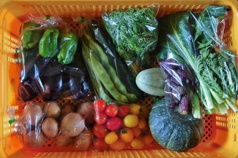 自然栽培夏野菜Lセット(会員割引あり・クール料込)