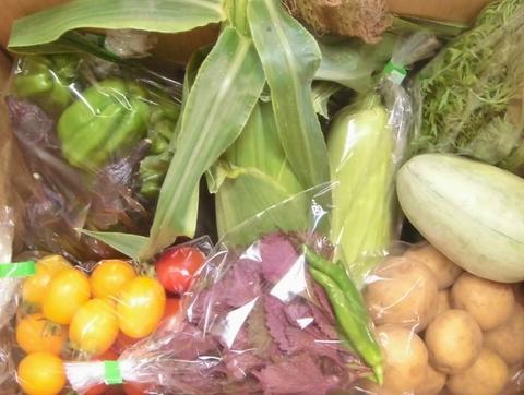 自然栽培野菜Mセット(大きめ5kg箱サイズクール料込)