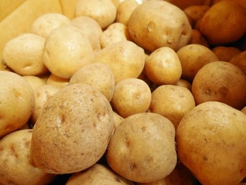 自然栽培 自家採種じゃがいもS・2S玉(キタアカリ系)10kg