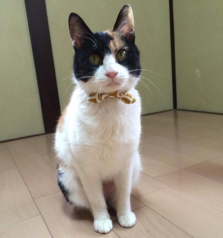 *お猫様専用* どろぼう柄の首輪