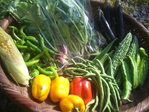 自然農・野菜セット