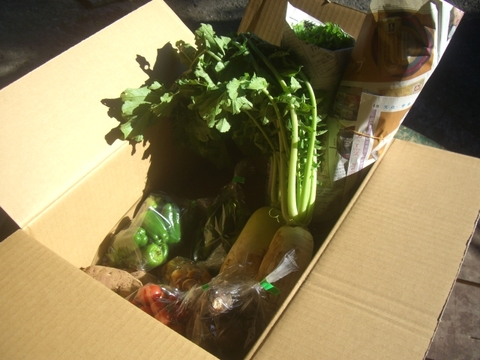 自然農の野菜ミニセット