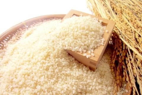 【玄米】イセヒカリ