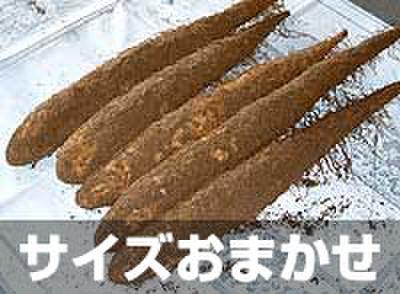 砂丘ナガイモ5kg【贈答用】 土付き サイズおまかせ