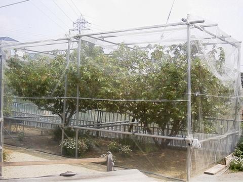 果樹ネット:MF2000―200cm幅×1m単位 長さカット