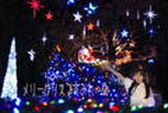 2009メリークリスマすみれーぬ