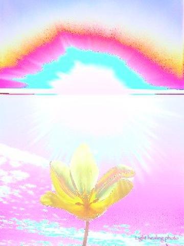 世界に一つだけの花 L