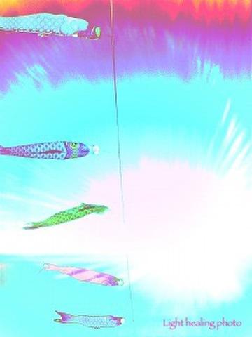 鯉のぼり L