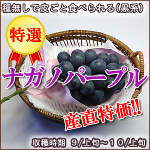 ナガノパープル 特選 1房(800g)