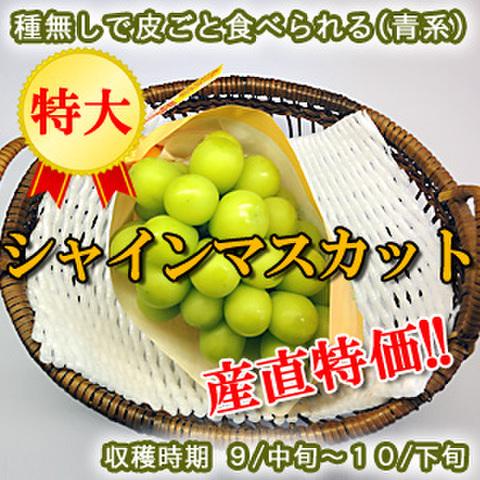 【希少】シャインマスカット 特大 1房(700g以上)