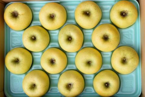 りんごシナノゴールド贈答品15kg箱