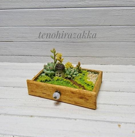 引き出しの中の小さなお庭*多肉ちゃんとキノコハウス