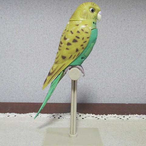 センサー付き小鳥!セキセイインコ