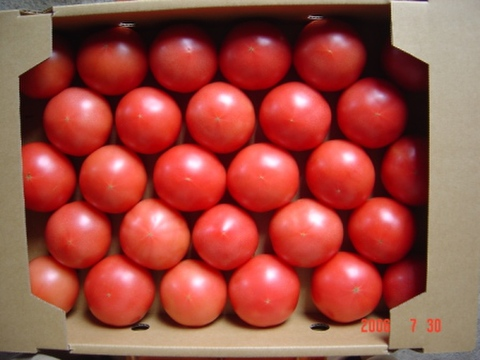 完熟トマト桃太郎M(4㎏・25~30個入)送料別