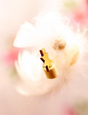 【春の進化祭り】B