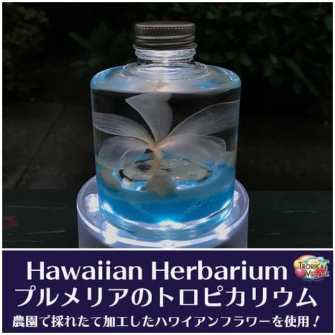 【ハワイアンなハーバリウム】プルメリアのTROPICARIUM(花色:ホワイト/オフホワイト系・スタッキングボトル) 農園特製のプリザーブドフラワー使用