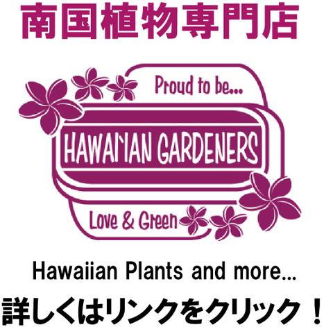 【特別セール実施中!】鉢植えプルメリア・ハワイアンプランツの販売コーナーへのリンク ●育てやすい鉢植えのプルメリアやハワイアンプランツ専門店●
