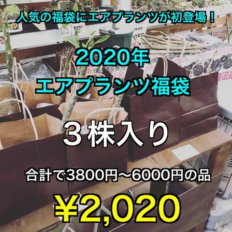 【福袋2020】エアプランツの2020円福袋・3株入り(3800円~6000円相当)●限定10セット