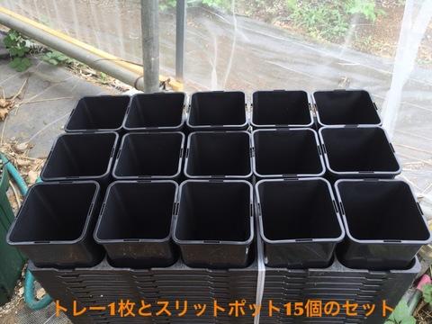 【プルメリア苗の植付に好適】角形スリットポット15個と専用トレーのセット