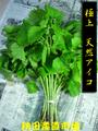 ◆秋田の山菜◆ あいこ(ミヤマイラクサ) 2kg