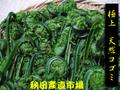 ◆秋田の山菜◆ こごみ 2kg