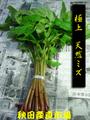 ◆秋田の山菜◆ みず 2kg