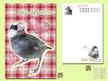 ポストカード「桜文鳥1」(DGY0005)