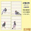 メモセット「桜文鳥・縦型」(DGY0031)
