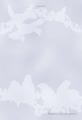 Blueberry&Javasparrowポストカード(TTP0036)