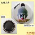 マグネット桜文鳥(DGY0024)