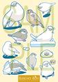 文鳥シール黄(BCB0007)