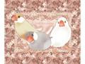 マイクロファイバークロス「Lovery Javasparrow」(TTP0014)