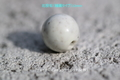 釉薬タイプ北投石セラミック球12㎜(HO-12)