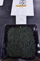 日本で一番高価な茶  日本一の手もみ茶2016
