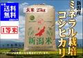 元年産ミネラル栽培米コシヒカリ 玄米25㎏【玄米色彩選別済】