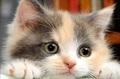 初心者応援!A4額縁付き【1-32】square 覗き見る猫