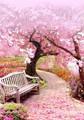 【4-26】A2 Squara 春のベンチ 桜花