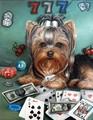 【1-9】ラッキー犬 ヨークシャテリア