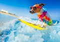 【1-168】A3square dog surfing