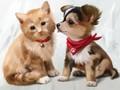 初心者応援!A4額付き【1-79】square 仲良しの猫とわんこ