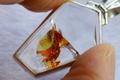 極上フェニックス!超透明ヘマトイツ・インクォーツ・ペンダント【最高品質・超透明・光沢・レインボー・超激レア】