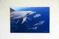 The Bonin Dolphins #001