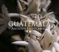 グァテマラ アンティグア ソレダー 200g