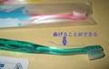犬用歯ブラシ / Ci シュワワ / 1本